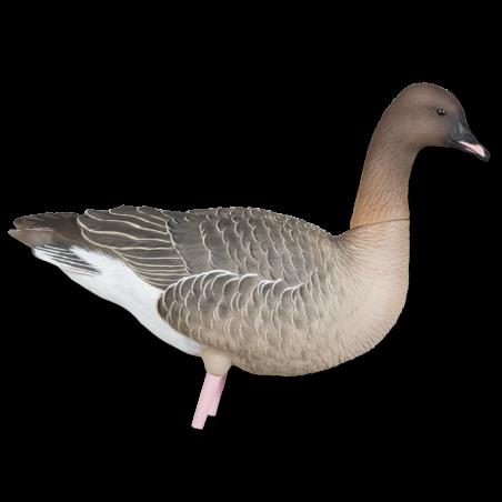 Kortnæbbede Gæs Avian-X
