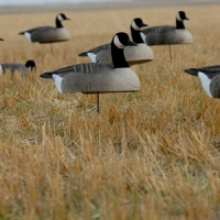 Canada Goose shells from GreenHead